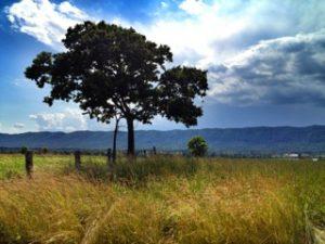 Sandra D. Moore tree