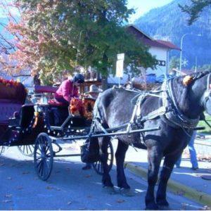 Kimberly Rose Johnson carriage